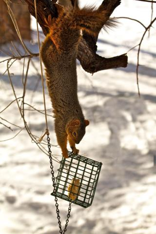 The Squirrel is Too Clever!