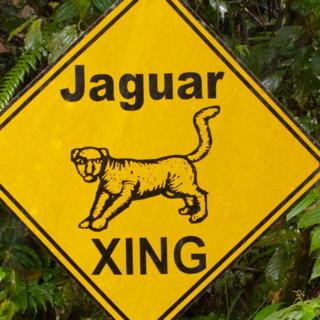 Watch for Jaguars!