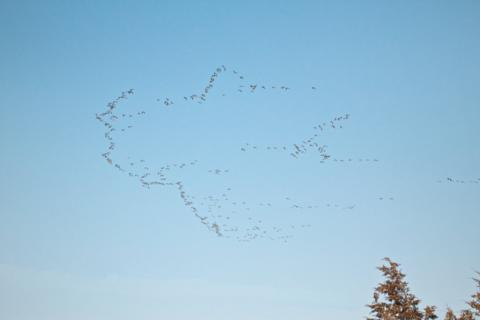 A Bird Formation, Not a Sketch