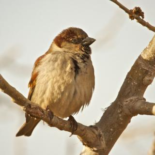 A Few Sparrow Were at the Wild Animal Sanctuary