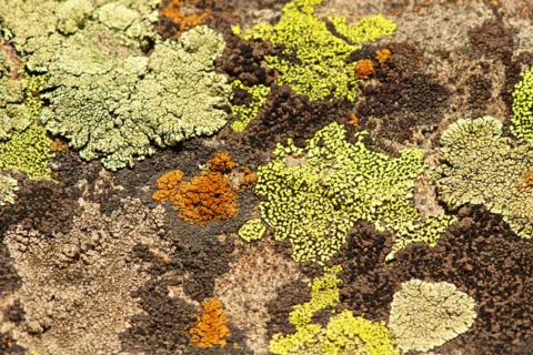 Lichens Come in Many Colors