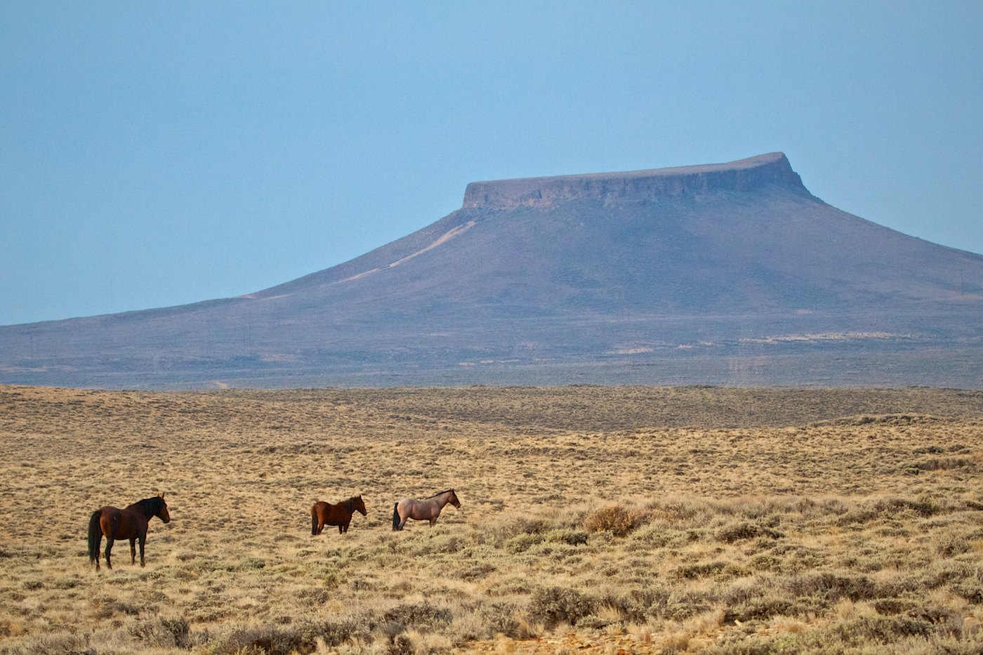 The Wild Horses Of Pilot Butte