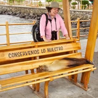 Sorry, but this Bench is Occupied by a Young Galapagos Sea Lion (Zalophus californianus) (Canon 50D with 18-200mm lens at 28mm, f/8, 1/800, ISO 800)