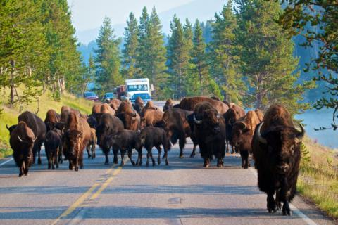 Road Block along the Yellowstone River! (Canon 7D with 100-400mm lens at 100mm, f/8, 1/350, ISO 800)