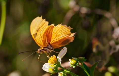 A Butterfly Sips Nectar from a Flower