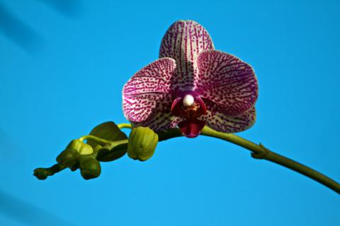 This Orchid Bloomed by Our Building