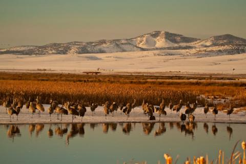 Sandhill Cranes Wake Up Near Open Water in the Refuge