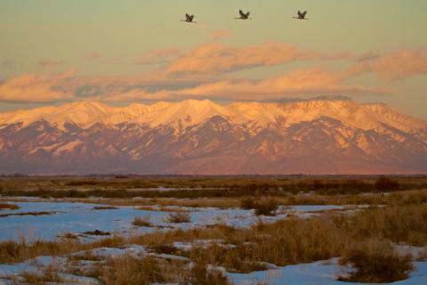 Later One Afternoon Three Other Sandhill Cranes Fly High