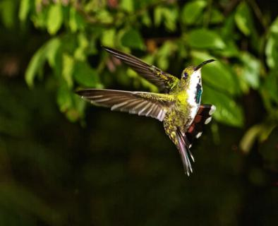 The Female of the Same Species Prepares to Land