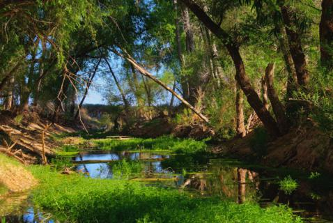 The San Pedro River is One of the Last Free-flowing Rivers in the Southwest and the Only One in a Desert