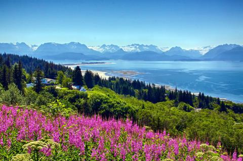 Fireweed Brightens the View of Homer, the Homer Spit, Kachemak Bay, and the Mountains Beyond