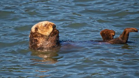 I Wonder if this Sea Otter Knows How Cute it Is