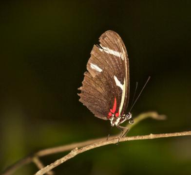 A Butterfly Roosts in the Dark Rainforest