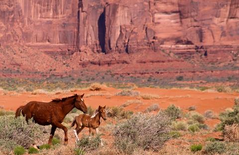 A Mare and Her Foal Live in the Valley
