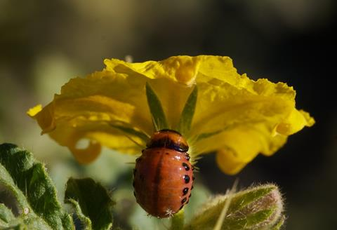 ​This is a Ladybird Beetle, Although I've Always Called it a Lady Bug