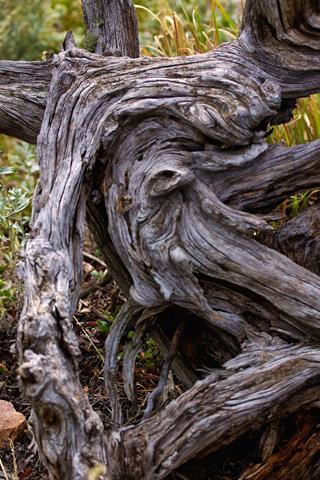 A Tree Twists and Turns