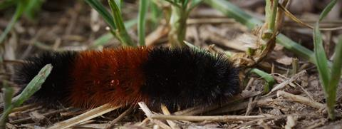 This Caterpillar Waited for Me to Lie Down Next to It