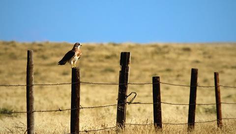 A Closer Cooper's Hawk