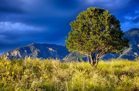 My Favorite Meditation Tree