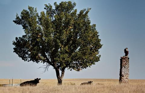 Here Only a Chimney, a Tree, and Cattle Remain