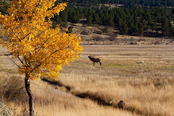 A Tree, a Trail, and an Elk