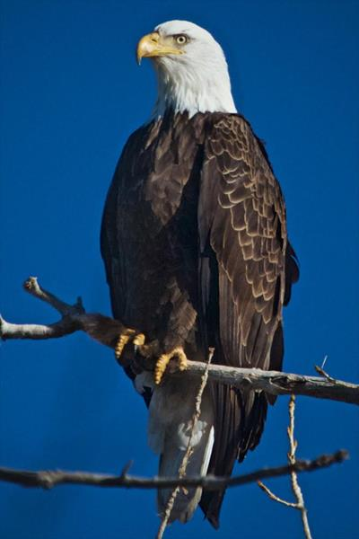 This Bald Eagle Was Patient
