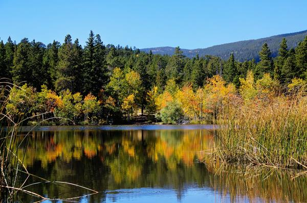 Aspens Are Beginning to Turn at Mud Lake