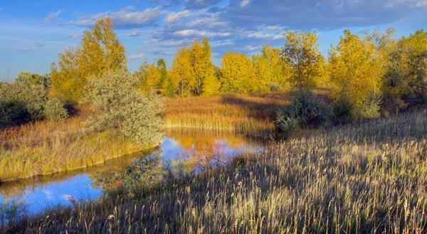 The Wetlands Shine in the Golden Hour