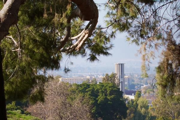 UCR's Carillon Bell Tower from the Botanic Gardens